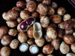 Kacang Bogor